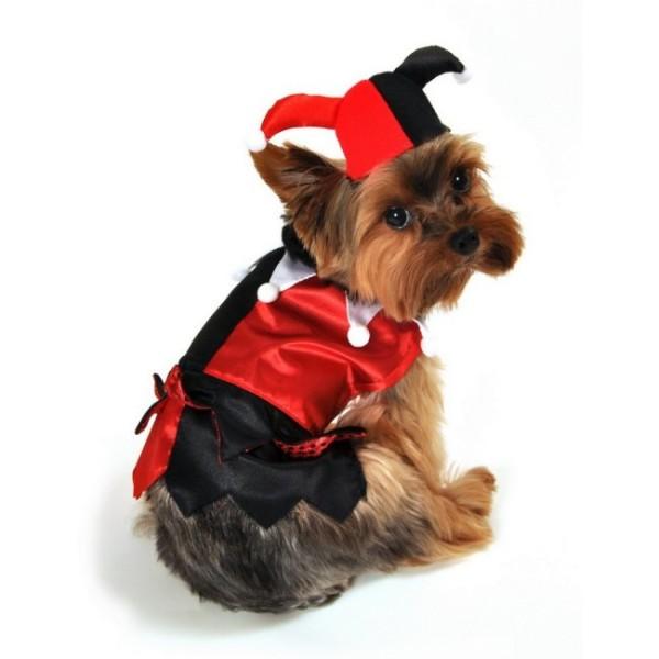 Mardi Gras Jester Dog Costume Houndabout