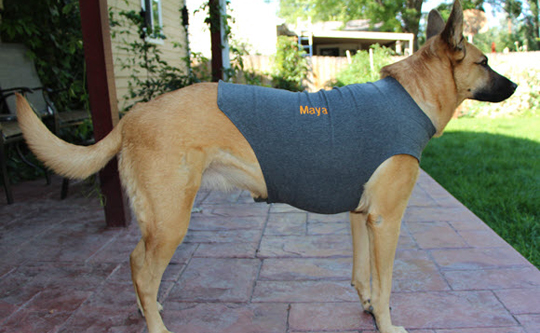 Maya Loves Her Thundershirt Houndabout