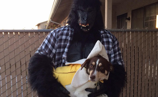 Pet Seat Covers >> Halloween Pet Costumes | HoundAbout