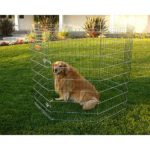 Dog Exercise Pen by Majestic Pet