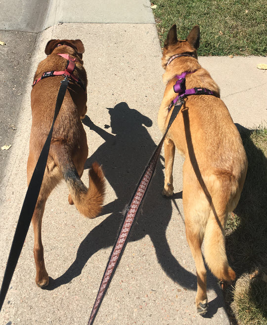 Review: KONG Comfort Dog Harness & Traffic Loop | HoundAbout